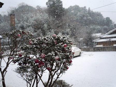 雪景色1(2018-01-24)