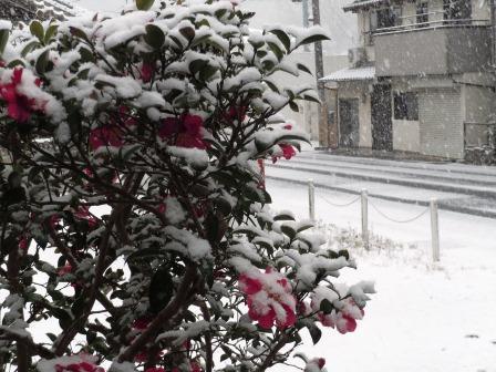 雪景色4(2018-01-24)