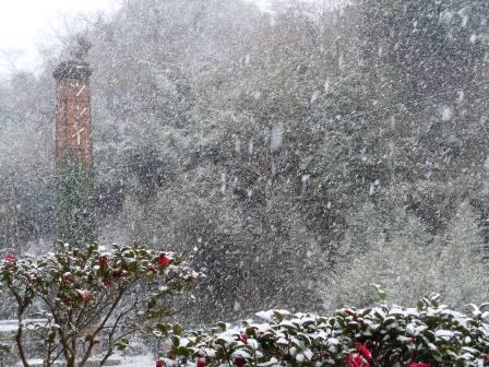 雪の朝35(2018-02-04)