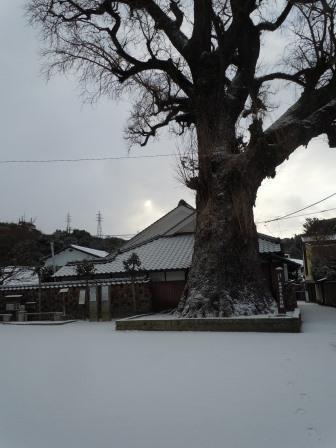 雪の朝11(2018-02-04)