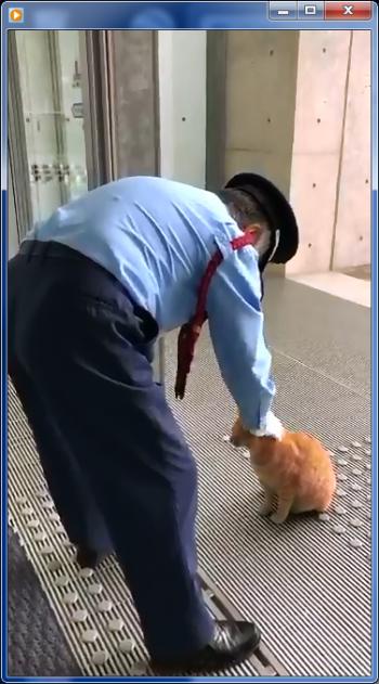 尾道猫01