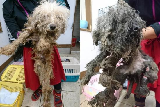 繁殖業の犠牲犬014~015