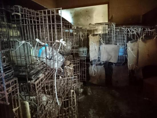 繁殖業の犠牲犬004