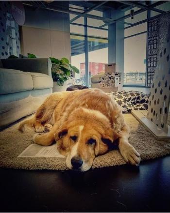 IKEA野良犬003