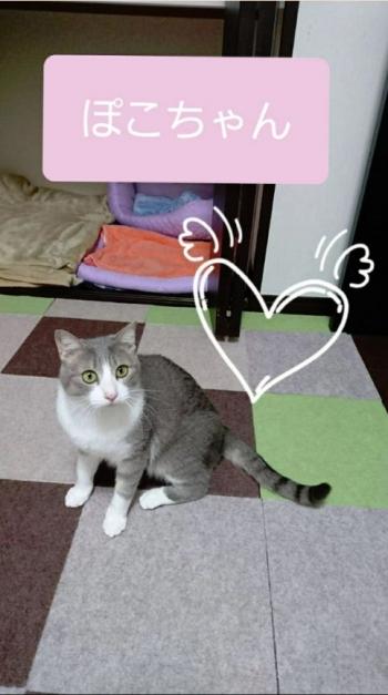 置き去り猫(ぽこちゃん3歳)001