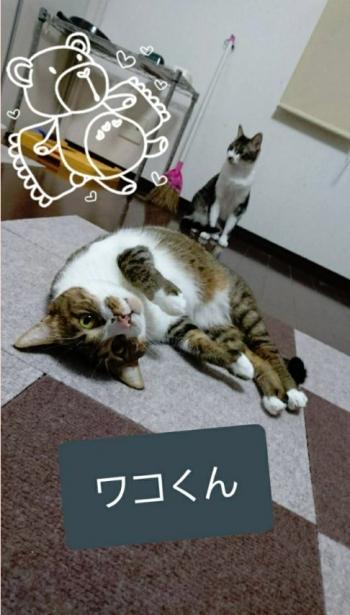置き去り猫(わこくん5歳)001