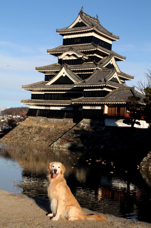 松本城とヒット(1)