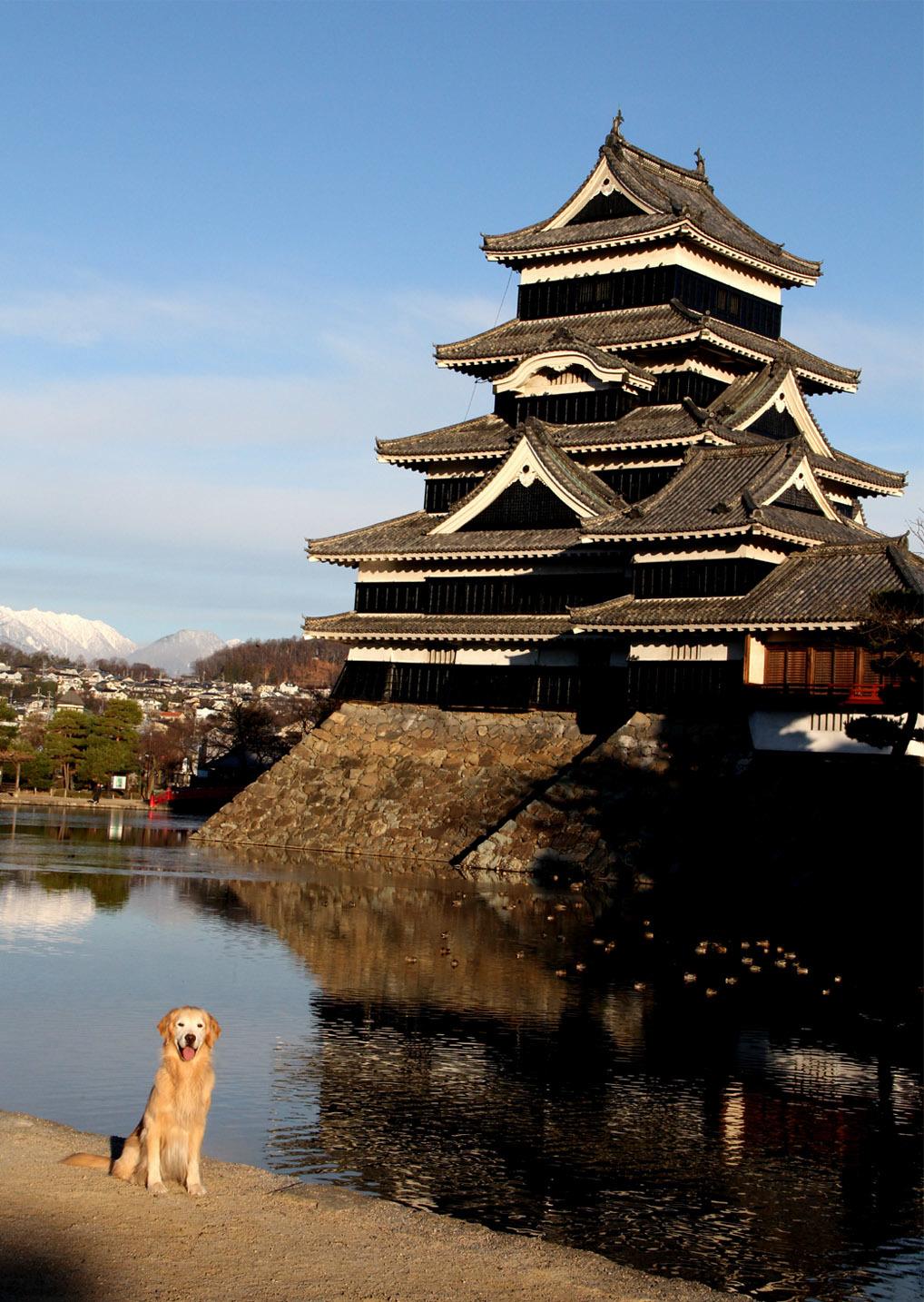 松本城とヒット(4)