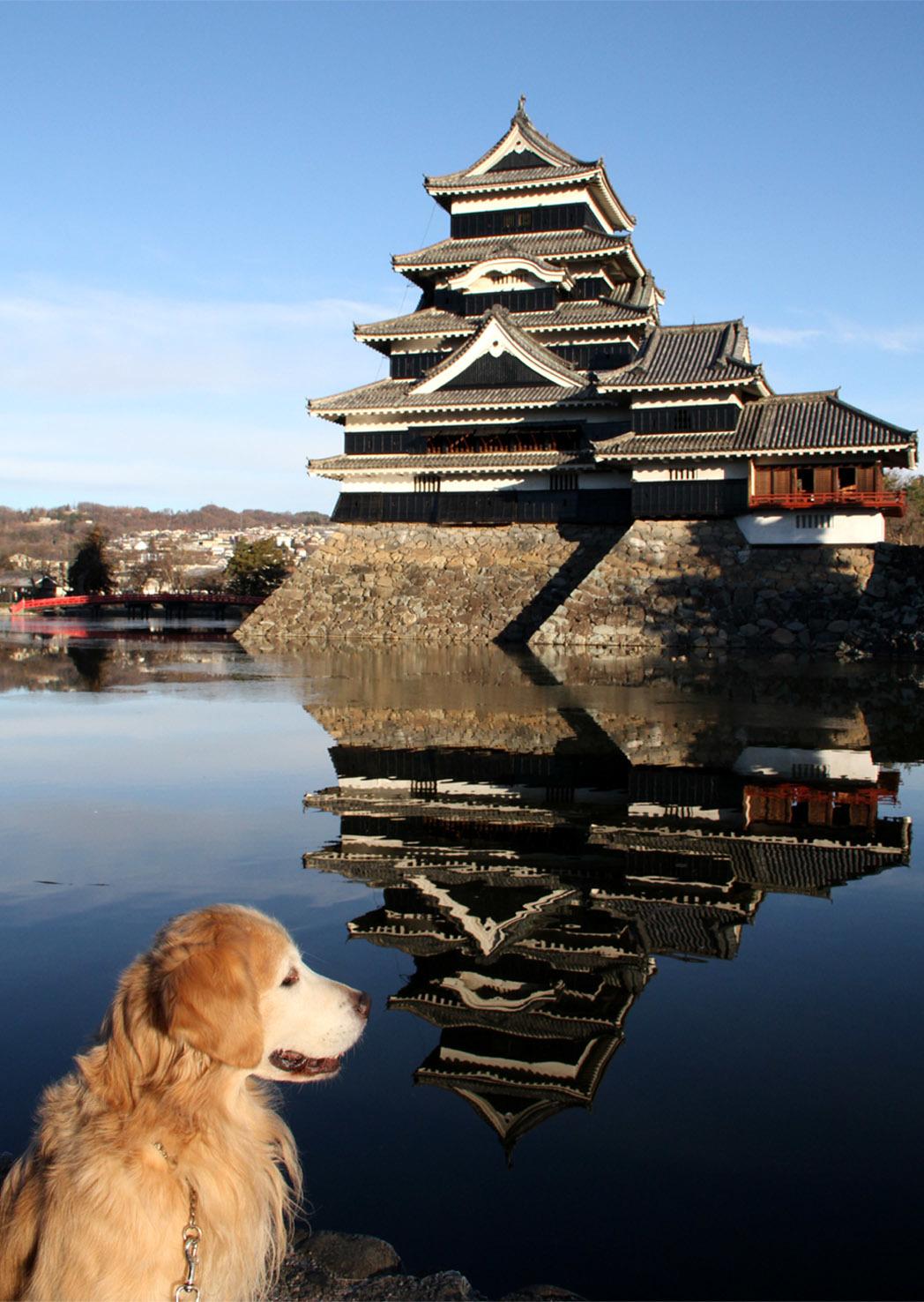 松本城とヒット(6)