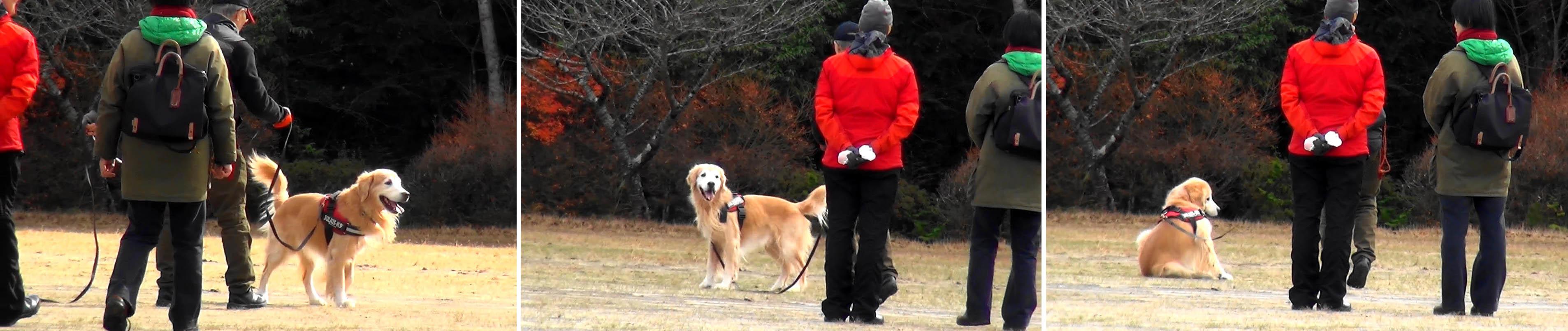 トレーリング訓練の動作表情(5)