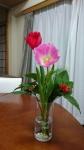 迎春花その2