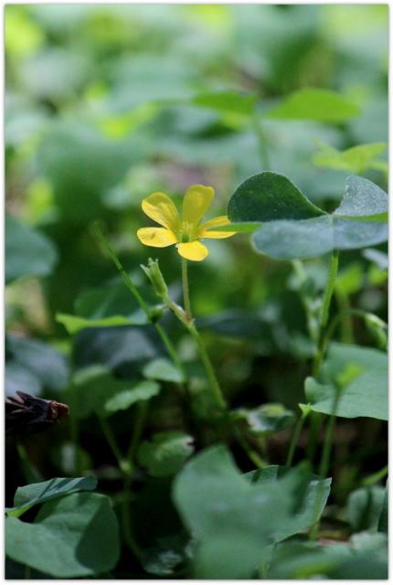 青森県 弘前市 弘前公園 弘前城植物園 弘前城 観光 写真