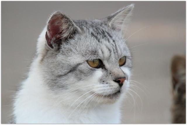 青森県 鰺ヶ沢町 漁港 猫 ねこ ネコ 写真