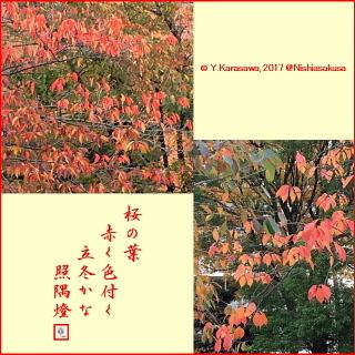171107桜の紅葉