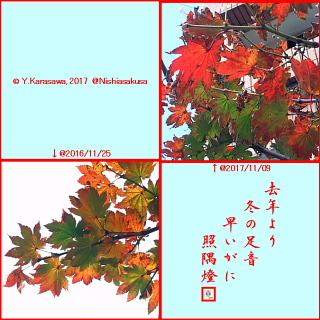 171118羽団扇楓の紅葉