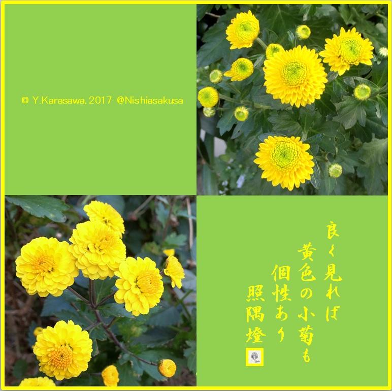171123黄色い小菊LRG