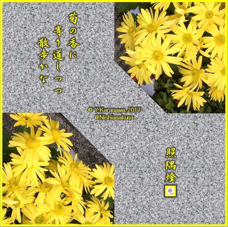 171204黄色い中菊LRG