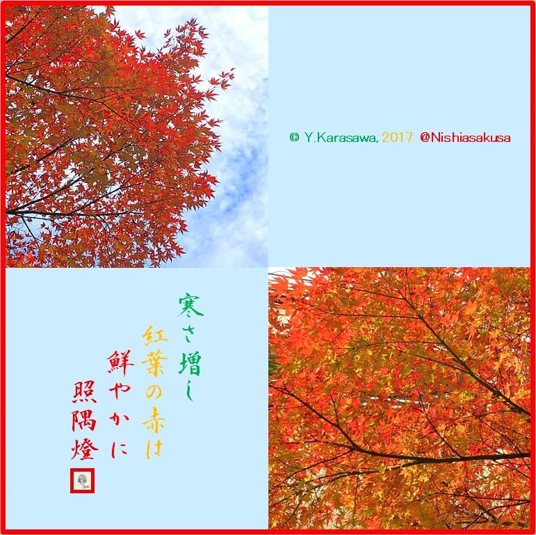 171205楓の紅葉LRG