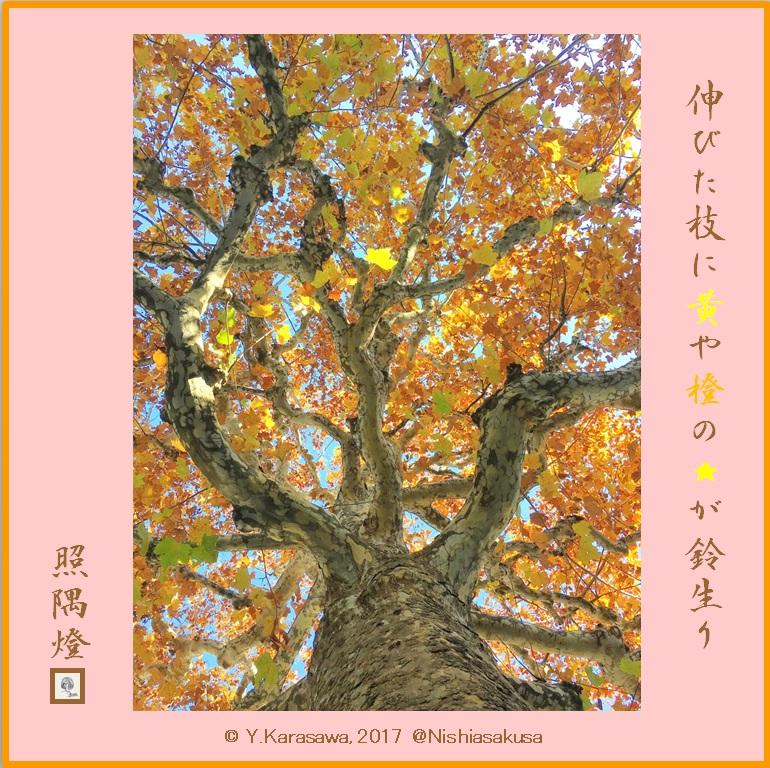 171206鈴懸の木の紅葉LRG