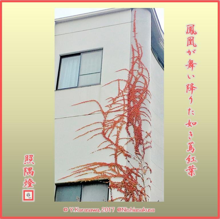 171207蔦の紅葉LRG