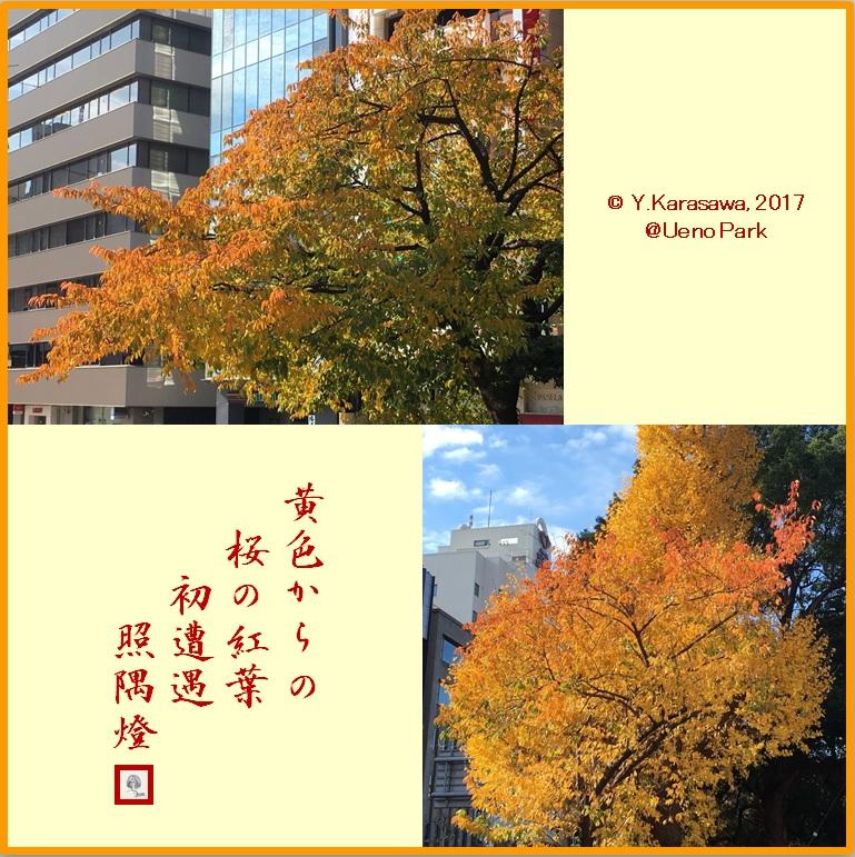 171226桜の紅葉LRG