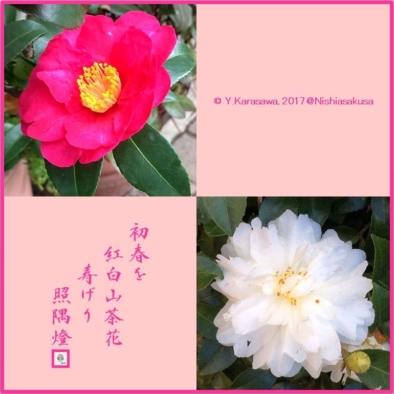 180101紅白山茶花LRG
