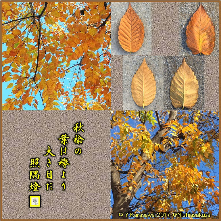 180105秋楡の紅葉LRG