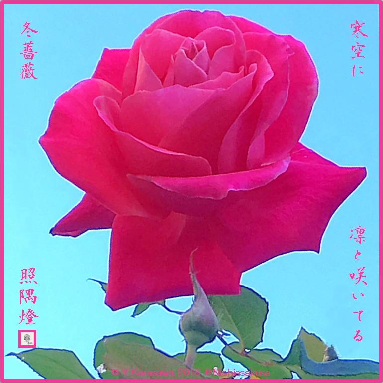 180111冬薔薇LRG