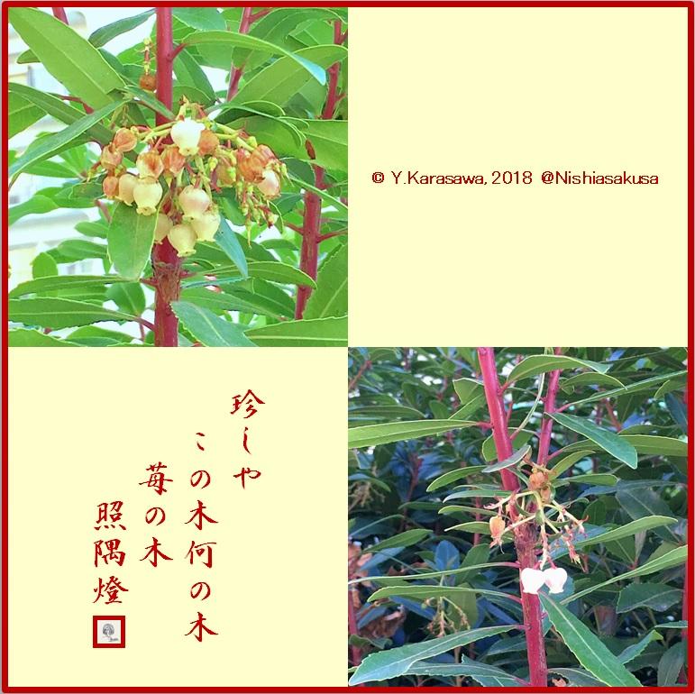 180117苺の木LRG