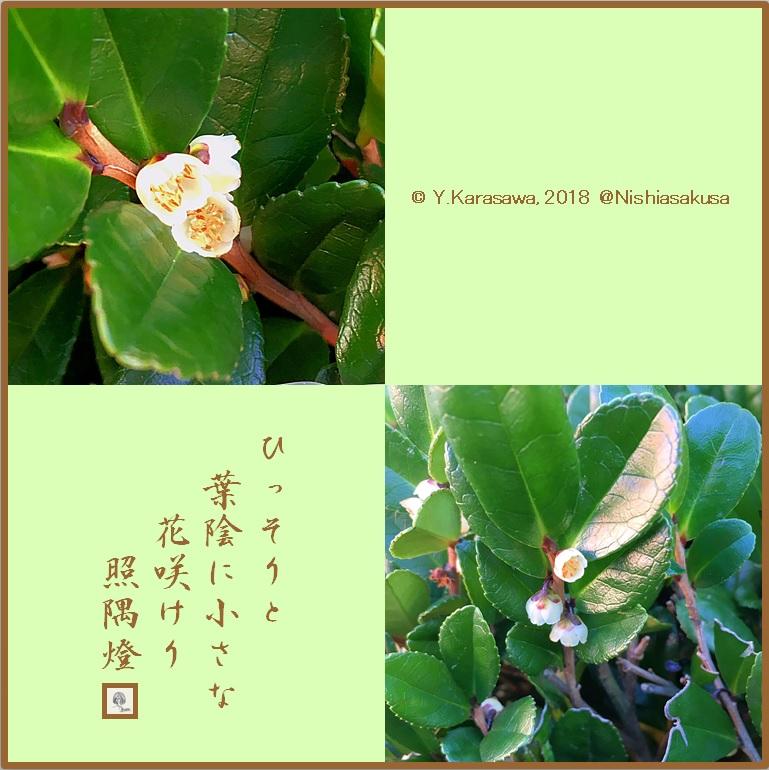 180119浜姫榊LRG
