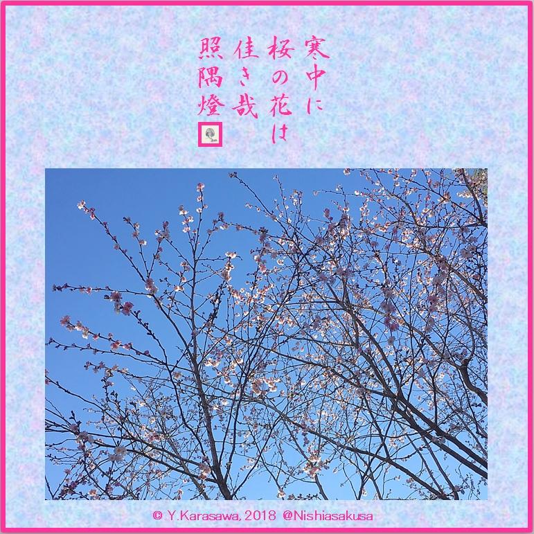 180124寒桜LRG