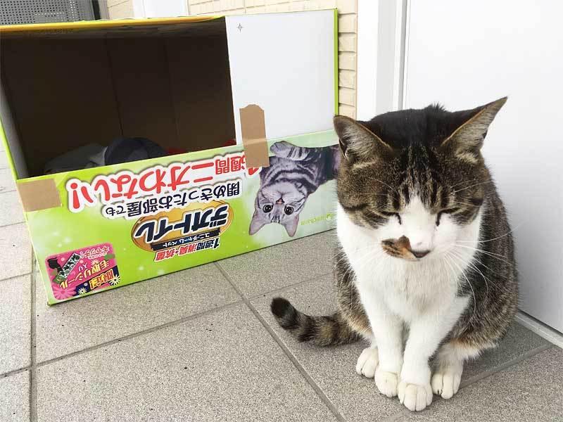 『はなちゃん家猫化計画』完遂!