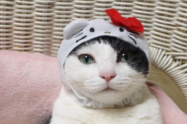 私はキティ