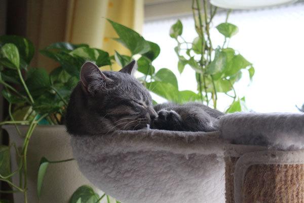 普通のネコ