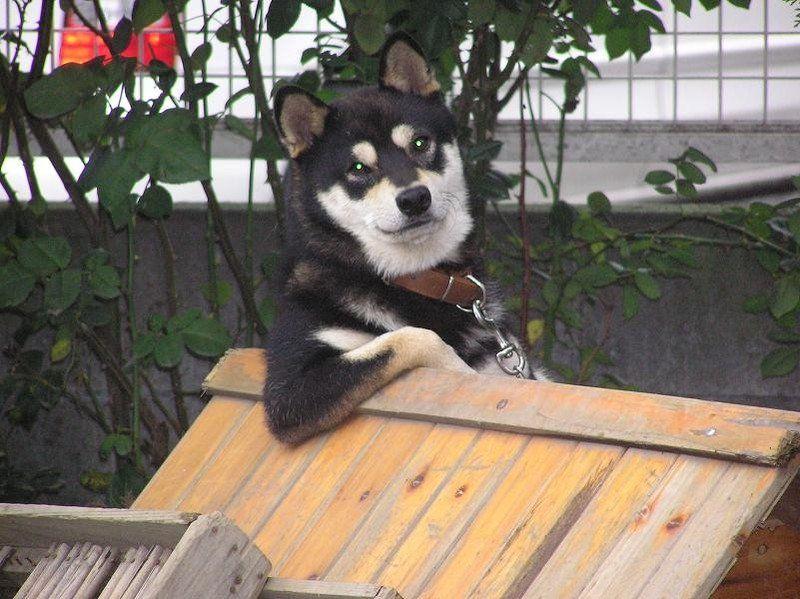 ゴリ押し 諭す犬