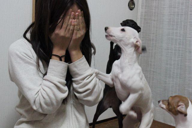 慰める 犬