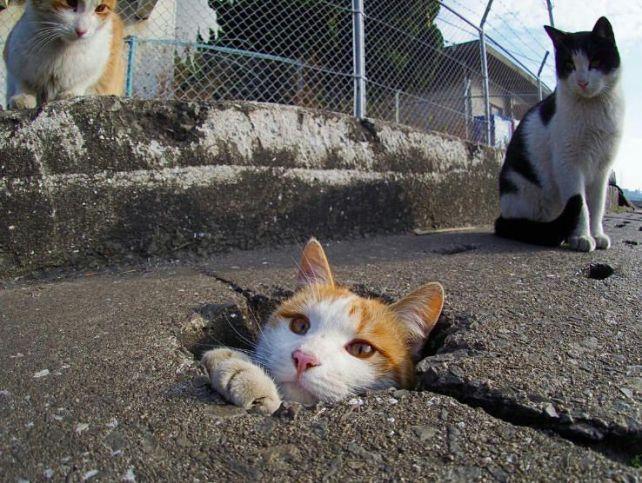 ネコ どこから出てきた?