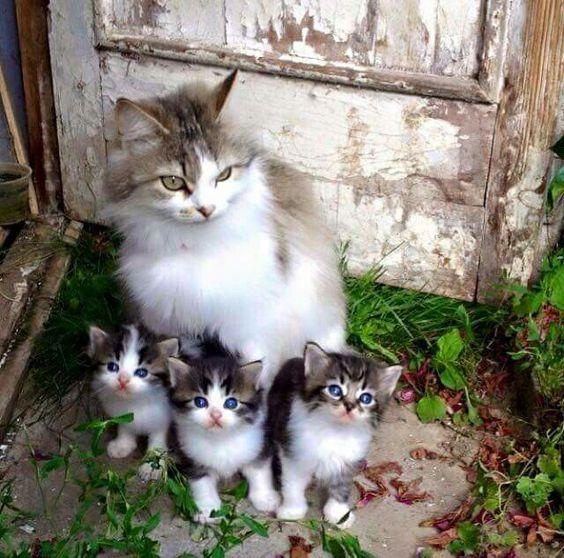 ネコの 親子