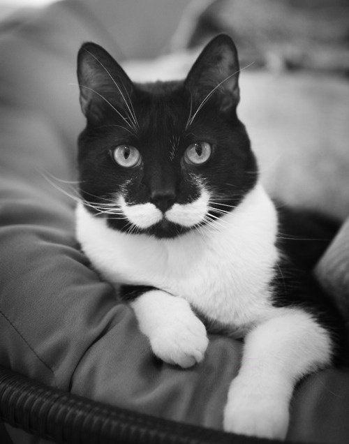 ヒゲのある猫 ヒゲ武者