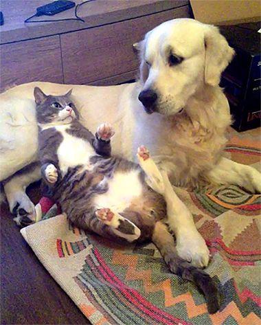 ネコと犬 会話