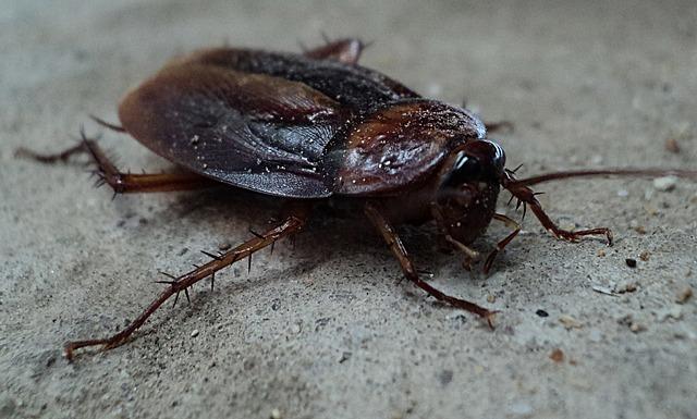 アメリカでゴキブリの「サイボーグ化」の研究が進められているって本当?