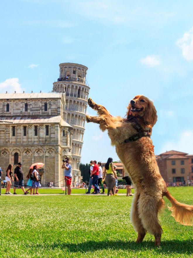 観光地で 踊る犬