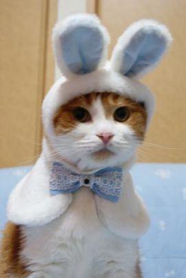 十二支に「猫」が入っていないのは何故?-ネズミにだまされた猫