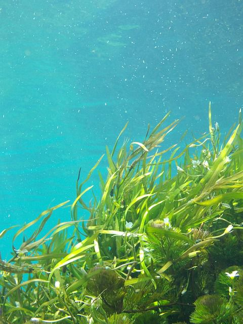 昆布 海草 藻類