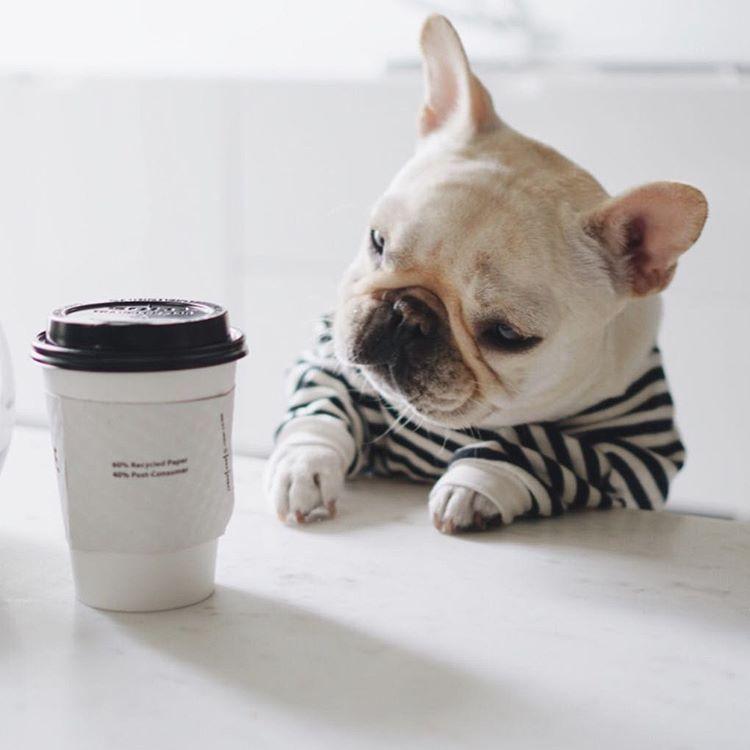コーヒーと 犬