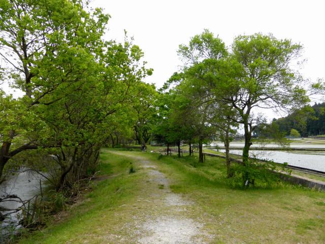 大溝の水辺景観6