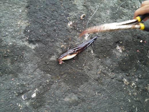 富津市の海で釣り (25)