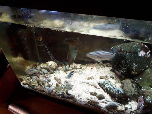 海水魚水槽 (1)
