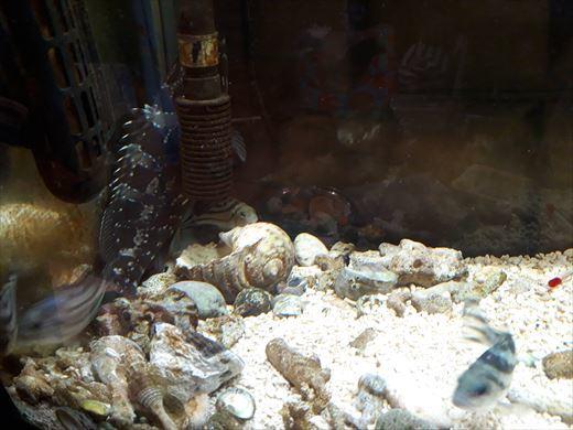海水魚水槽 (9)