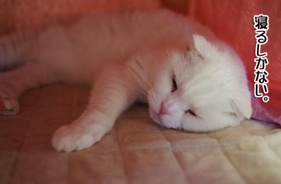 寝るしかなしピー